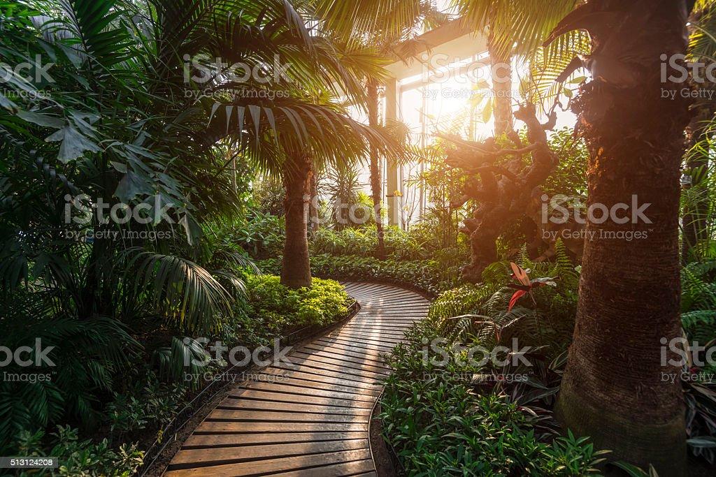 Tropische Hintergrund – Foto
