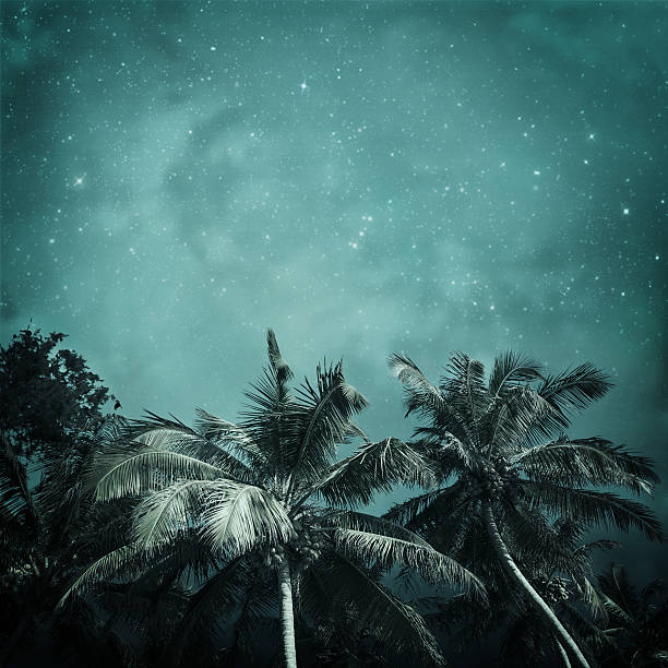tropical background night tropic background in vintage style big island hawaii islands stock pictures, royalty-free photos & images