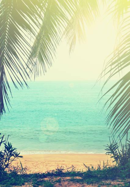 Tropical background picture id924666980?b=1&k=6&m=924666980&s=612x612&w=0&h=p6kivnulp4x5ixdmqs5sixockw4axumhxysal6plpxa=