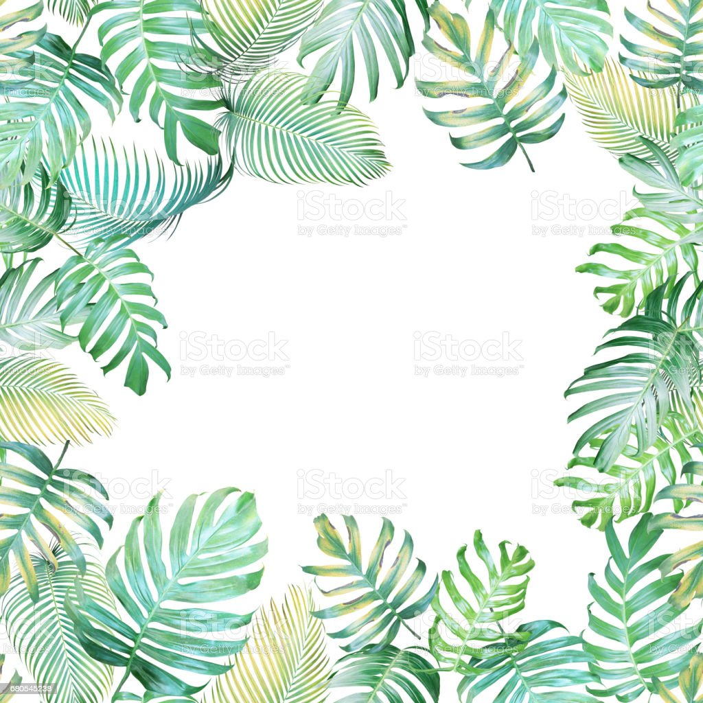Tropical background with Monstera philodendron and palm leaves in light green-yellow color tone, tropical leaves frame on white background. stock photo