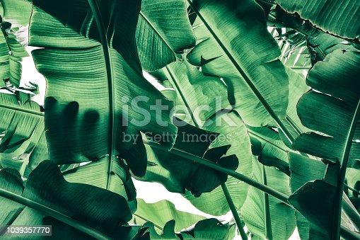 close-up of palm leaf, dark toned