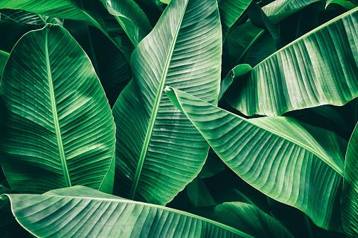 열 대 바나나 팜 리프 0명에 대한 스톡 사진 및 기타 이미지