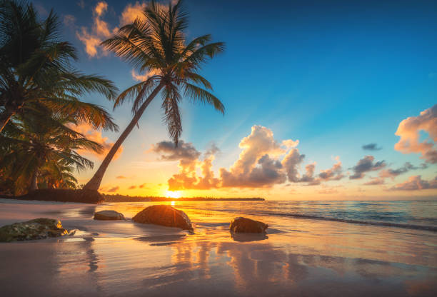 tropischer strand und wunderschöner sonnenaufgang in der bucht von punta cana, dominikanische republik - idylle stock-fotos und bilder