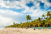 Tropical beach and palm trees on a windy Caribbean day