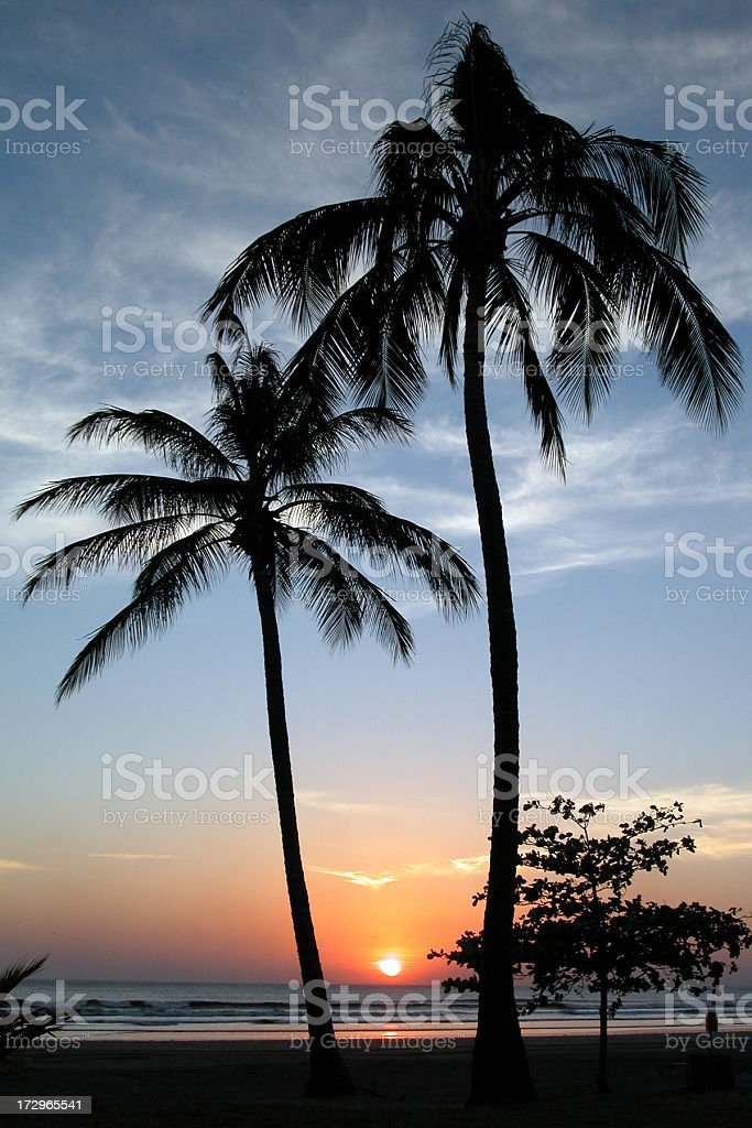 Tropical Beach and Palm Trees Sunset royalty-free stock photo