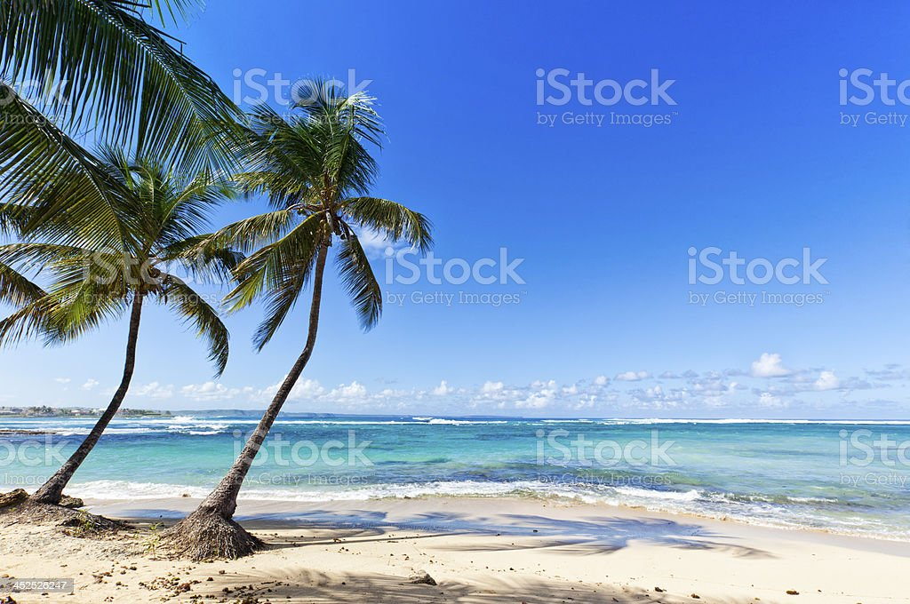 Tropical Beach at Le Moule, Guadeloupe Island stock photo