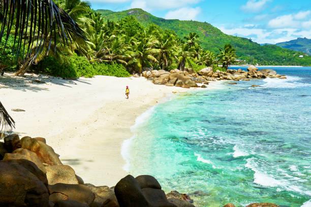 세이셸, 마헤, 몸집이 작은 마리 남쪽 열 대 해변 루이스 - 마헤 섬 뉴스 사진 이미지