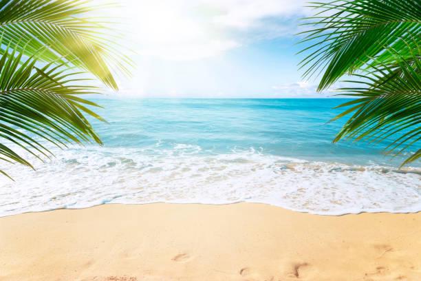 fondo de playa tropical - playa fotografías e imágenes de stock