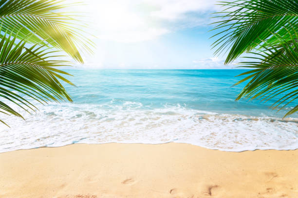 tropical beach background - beach stock pictures, royalty-free photos & images