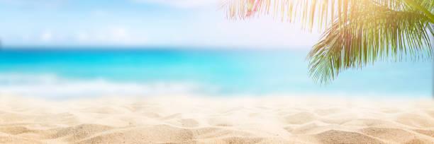 Tropical beach background picture id1153571910?b=1&k=6&m=1153571910&s=612x612&w=0&h=sktpredmrirbyej4sqsyq8nhf1 ht0p u5bvbq7p89c=