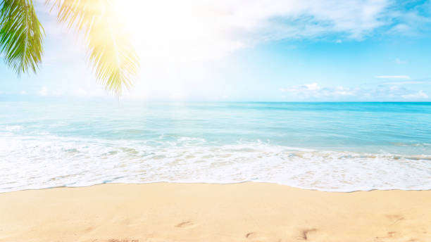 Tropical beach background stock photo