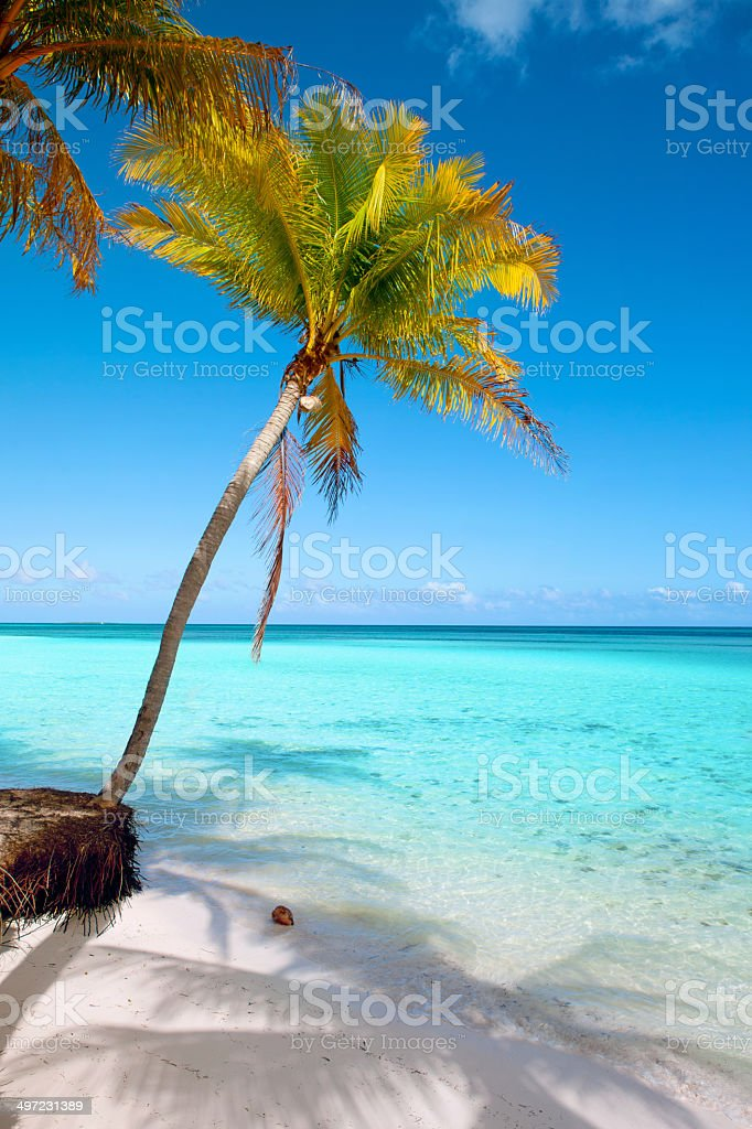 Tropical Beach Blue Sky Palm Trees Turquoise Sea Water Vertical Royalty