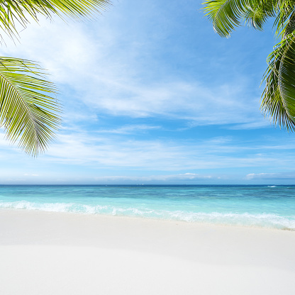istock Tropical beach copy space scene 1144456717