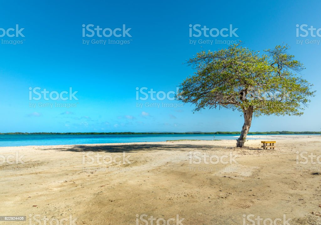 Tropical beach eiyh one tree and bench. This image is GPS tagged stock photo