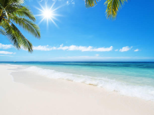 Tropical beach idyllic landscape stock photo