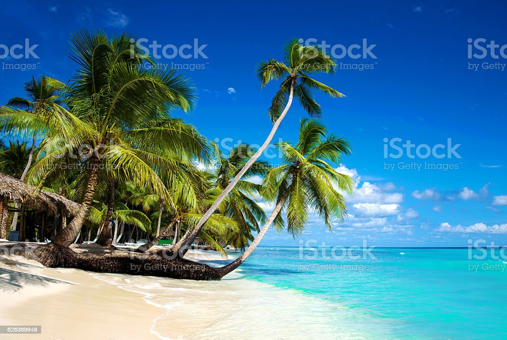 Tropical beach in caribbean sea, Saona island, Dominican Republic – Foto