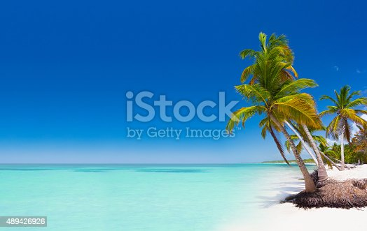 Tropical paradise - palm trees on white sand beach in caribbean wild nature scenery near Punta Cana, Dominican Republic