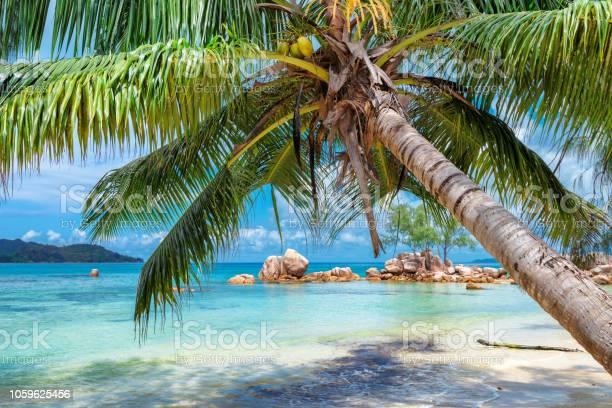 Tropical beach in paradise island picture id1059625456?b=1&k=6&m=1059625456&s=612x612&h=kvurvlcfs8jx3byxvk 0dcmlnuobtky3ieo3sxutcxy=