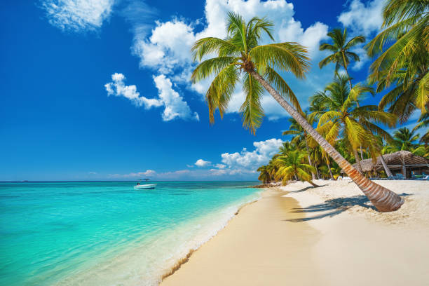 Tropischer Strand in Punta Cana, Dominikanische Republik. Karibische Insel. – Foto