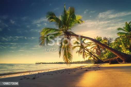 Tropical beach in Punta Cana, Dominican Republic. Palm trees on sandy island in the ocean.