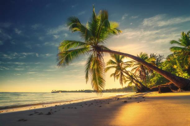 Tropischer Strand in Punta Cana, Dominikanische Republik. Palmen am Sandstrand Insel im Ozean. – Foto