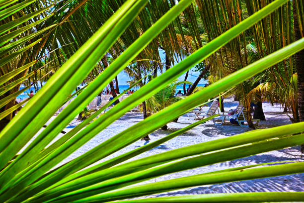A tropical beach in Roatan Honduras. Cruise tourists soaking up the sun and swimming in the ocean masked by a palm frond. stock photo