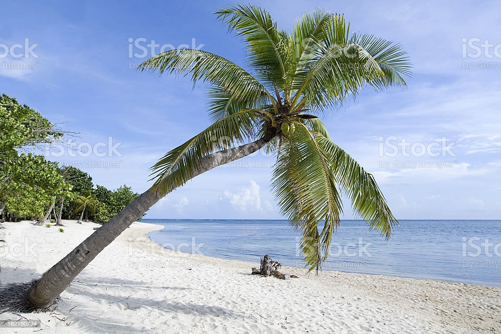 Tropical Beach Palm stock photo