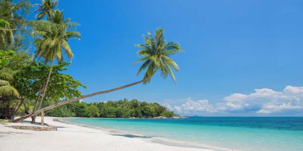 tropischer strand panorama mit einer schiefen palme, bintan island in der nähe von singapur, indonesien - urlaub in kuba stock-fotos und bilder