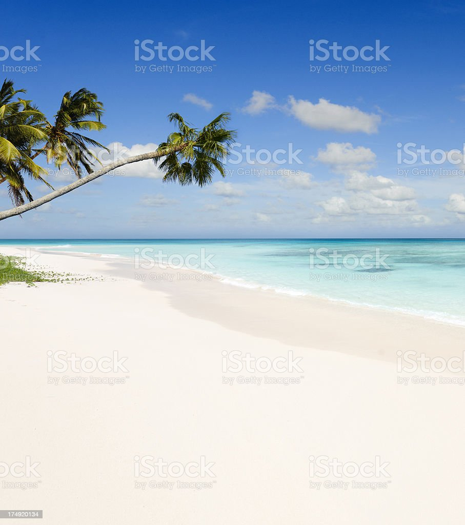 Tropical Beach Paradise with Palm Trees royalty-free stock photo