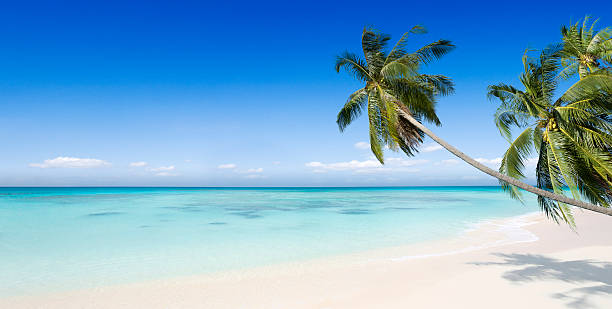 Tropical Beach Paradise with Palm Trees stock photo