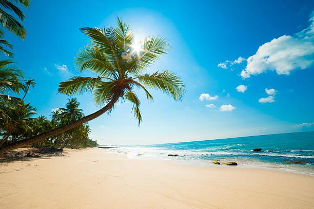 tropischer strand - idylle stock-fotos und bilder