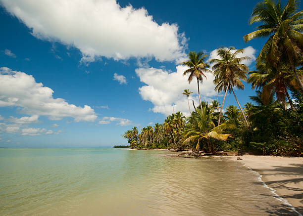 Tropical beach Wild white tropical beach. Dominican Republic. round loaf stock pictures, royalty-free photos & images