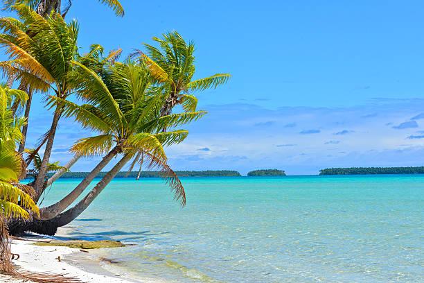 plage tropicale  - palm photos et images de collection