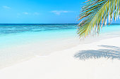 Tropical beach nature background
