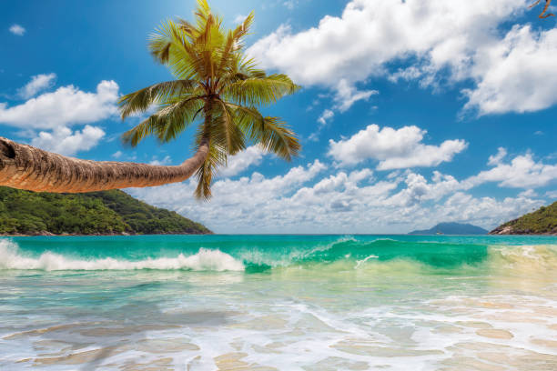 tropical beach. - jamaica stock photos and pictures