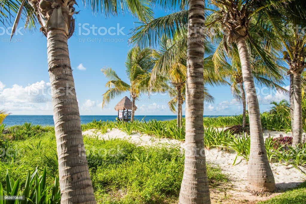 tropical beach - Royalty-free Banner - Sign Stock Photo