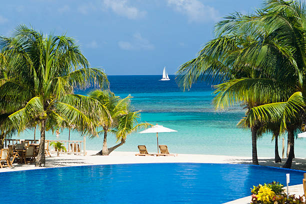 Tropical Beach Resort Pool Resort infinity pool overlooks tropical beach, palm trees, and Caribbean Sea. Roatan, Honduras roatan stock pictures, royalty-free photos & images