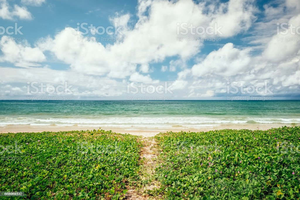 Tropical beach scenery at Andaman sea in Phuket, Thailand. Exotic sea view of tropical summer paradise beach and green foliage lawn of Phuket island with sunny sky and white clouds on horizon foto stock royalty-free