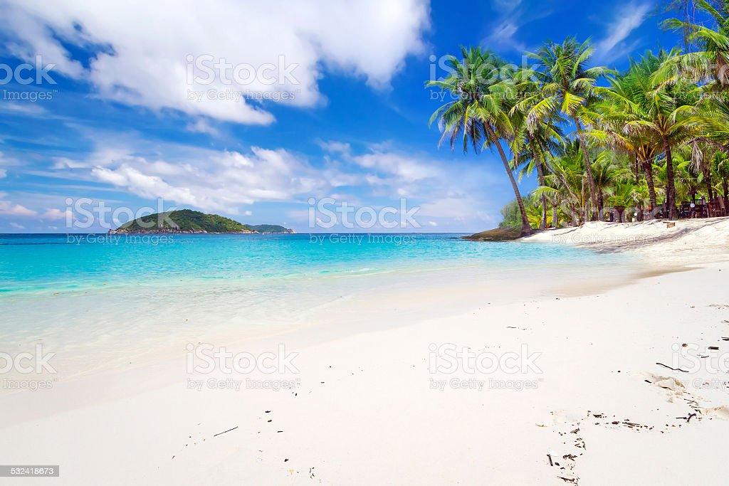 Tropikalna Plaża krajobrazy – zdjęcie