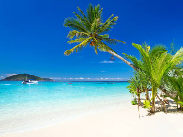 tropical beach scenery - playa del carmen stock photos and pictures