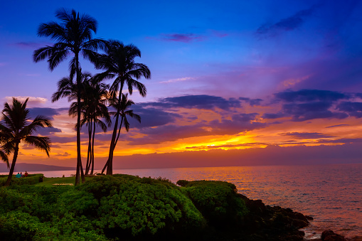 Silhouette of palm trees on the tropical beach at sunset.