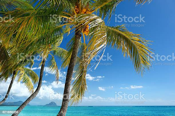 Photo of Tropical beach with a palm tree