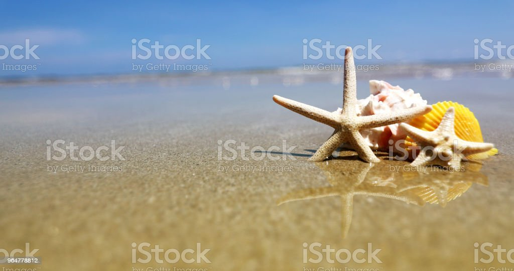 Tropical beach with a seashells and starfish for summer holiday season background royalty-free stock photo