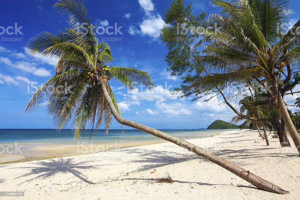 tropical beach with coconut palm royalty-free stock photo