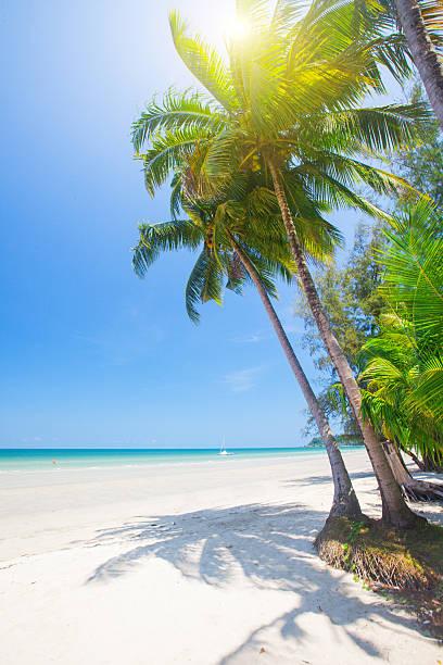 Tropischen Strand mit Kokospalmen – Foto
