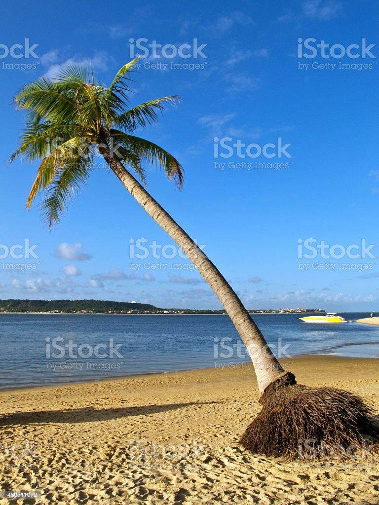 Praia Tropical com palmeira de coco - foto de acervo