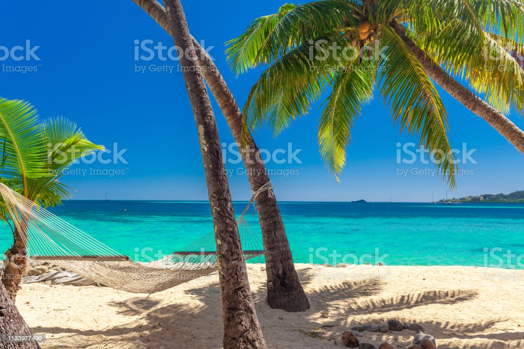 Tropical Beach With Coconut Palm Trees And Clear Lagoon Fiji Islands Stock Photo Download Image Now