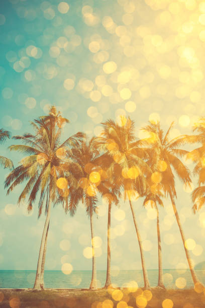 Tropical beach with golden party glamour bokeh overlay picture id653756054?b=1&k=6&m=653756054&s=612x612&w=0&h=ocs9xa utffx5zllqrct4 sgulvqsh3l x3syxiasga=