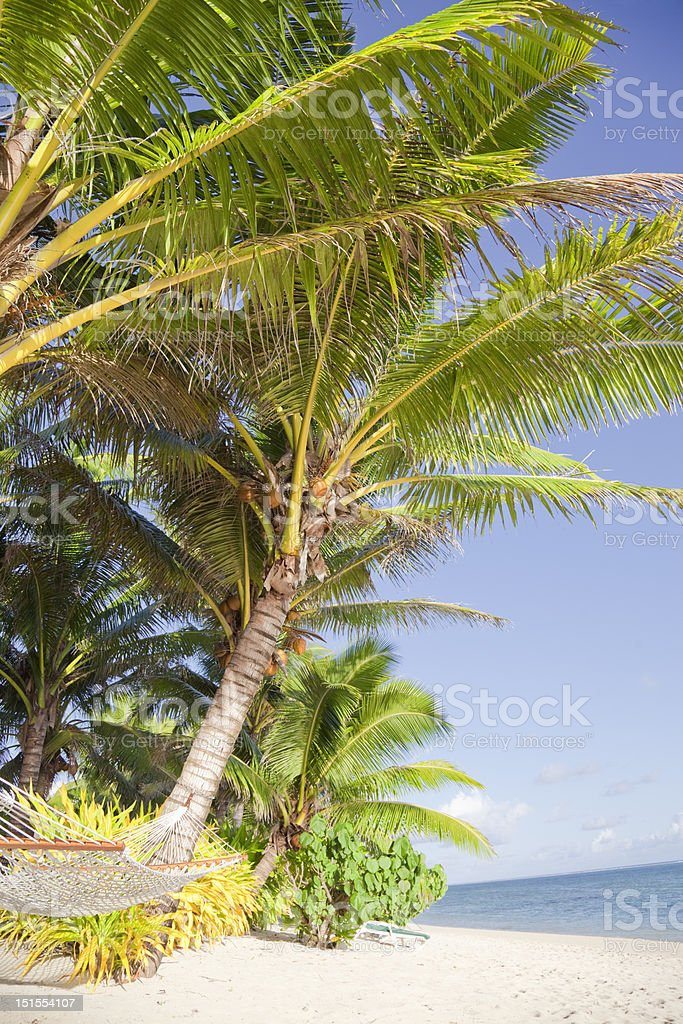 Tropical Beach with Hammock and Coco Palms royalty-free stock photo