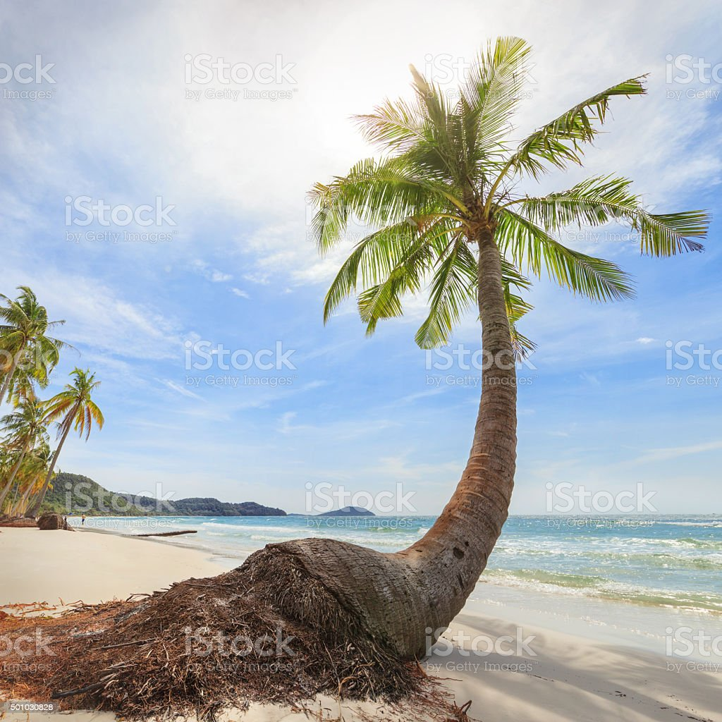 tropical beach with high palms stock photo